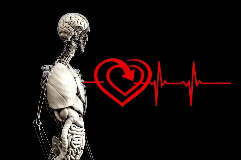 Die intuitive Intelligenz des Herzens